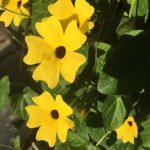 Herbalism Workshops